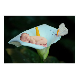 Une fleur de bébé et de nénuphar poster