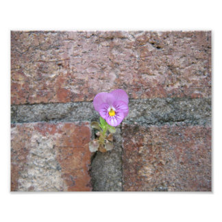 Une fleur de béton photographies