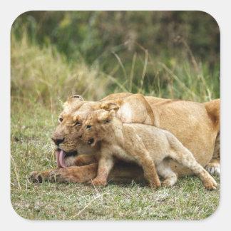 Une lionne et son petit animal espiègle sticker carré