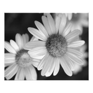 Une photo noire et blanche d'une fleur