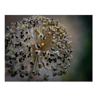 Ungewöhnliche Blume Postkarte