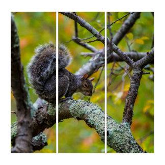 Unheimliche Eichhörnchen AcryliPrint®HD Triptychon
