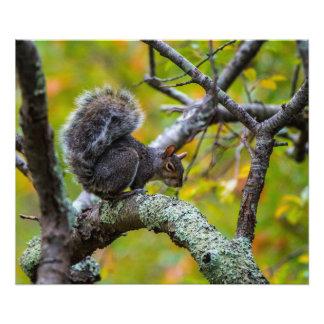 Unheimliches Eichhörnchen 24 x 20 Kodak Fotodruck