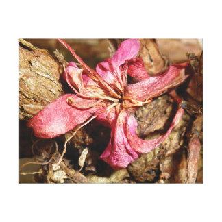 Unterscheidende Nahaufnahme-Foto-Rosablüte Leinwanddruck