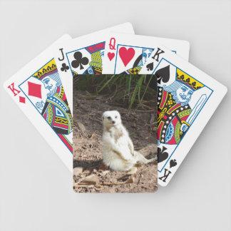 Unverschämtes weißes Meerkat, Bicycle Spielkarten