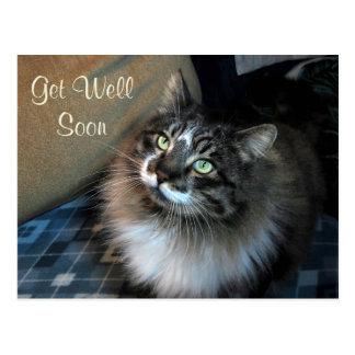 Unwiderstehliche Katze Zorro erhalten wohle bald Postkarte