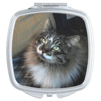 Unwiderstehliche Katze Zorro kompakter Spiegel Taschenspiegel