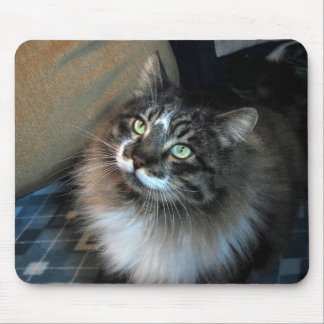 Unwiderstehliche Katze Zorro Mausunterlage Mousepad