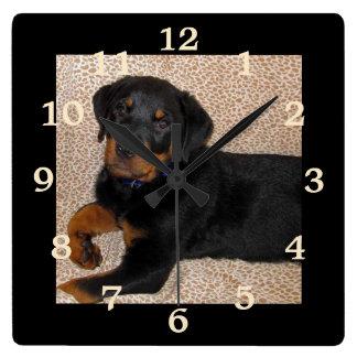 Unwiderstehlicher Rottweiler Welpe nummeriert Quadratische Wanduhr