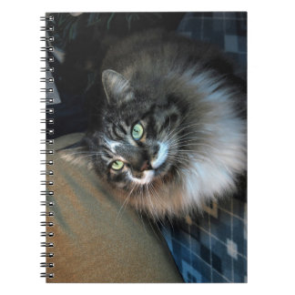 Unwiderstehliches Katze Zorro Notizbuch Notizblock
