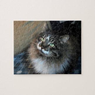 Unwiderstehliches Katze Zorro Puzzlespiel