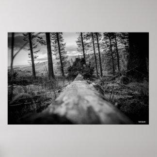 Ursprüngliche Fotografie: Über dem gefallenen Baum Poster