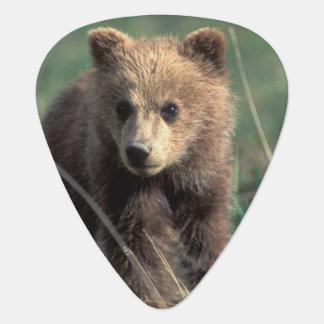 USA, Alaska, Denali Nationalpark, Graubär Plektron