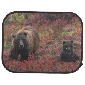USA, Alaska, Denali Nationalpark. Grizzlybär Autofußmatte