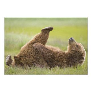 USA, Alaska, Katmai Nationalpark, Braunbär Kunst Fotos