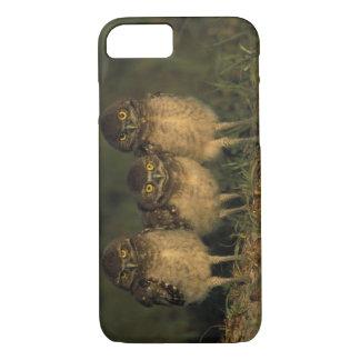 USA, Florida, Kap-Koralle. Drei grabende Eulen iPhone 8/7 Hülle