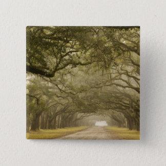 USA, Georgia, Savanne, ein gezeichneter Antrieb Quadratischer Button 5,1 Cm