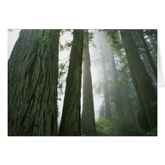 USA, Kalifornien, Rotholz-Nationalpark, 2 Karte