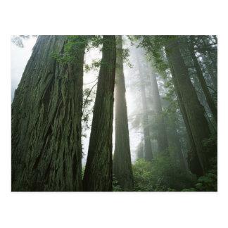 USA, Kalifornien, Rotholz-Nationalpark, 2 Postkarte