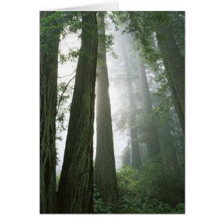 USA, Kalifornien, Rotholz-Nationalpark, Karte