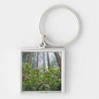 USA, Kalifornien, Rotholz NP. Rhododendron Silberfarbener Quadratischer Schlüsselanhänger