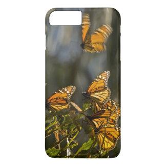 USA, Kalifornien, San Luis Obispo County. Monarch iPhone 8 Plus/7 Plus Hülle