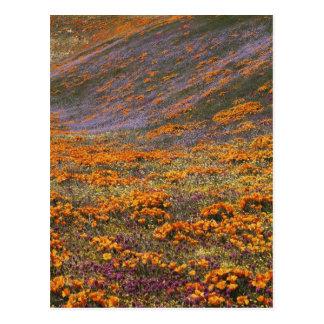 USA, Kalifornien, Tehachapi Berge, 2 Postkarte