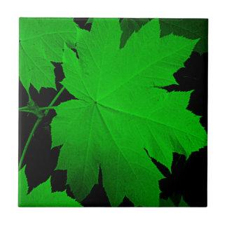 USA, Kansas, Eichen-Blätter im Licht Kleine Quadratische Fliese