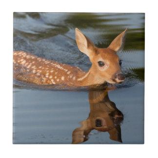 USA, Minnesota, Sandstein, Minnesota-wild lebende Kachel
