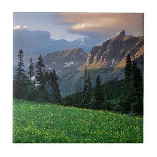USA, Montana, Glacier Nationalpark, Fliese
