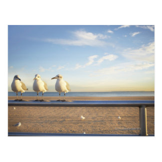 USA, New York City, Coney Island, drei Seemöwen Postkarte