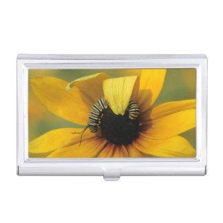 USA, Pennsylvania. Monarch-Raupe auf Gänseblümchen Visitenkarten Etui
