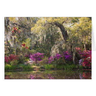 USA, South Carolina, Charleston. Zypresse-Bäume 2 Karte