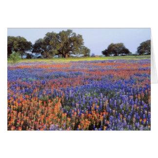 USA, Texas, Llano. Bluebonnets und redbonnets Karte