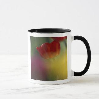 USA, Utah, Pufferspeicher-Tal-Tulpen in einem Tasse
