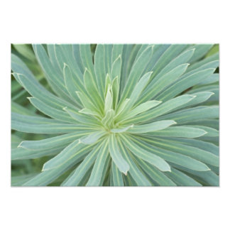 USA, Washington, Bellevue, Bellevue botanische 4 Foto Druck