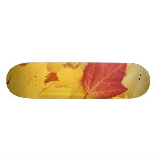 USA, Washington, Fink-Arboretum, Rot und 20,1 Cm Skateboard Deck