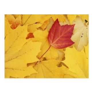 USA, Washington, Fink-Arboretum, Rot und Postkarte