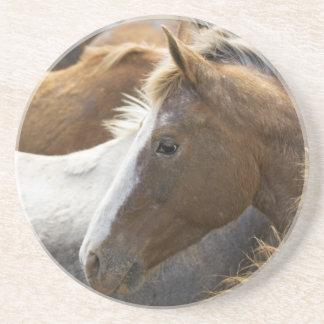 USA, Washington, Màlaga, Pferdekopfprofil herein Untersetzer