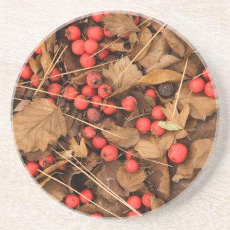 USA, Washington, Spokane County, Weißdorn-Blätter Sandstein Untersetzer