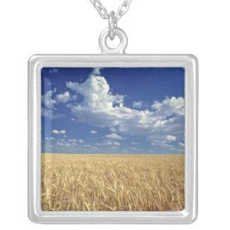 USA, Washington-Staat, Colfax. Reifer Weizen Versilberte Kette