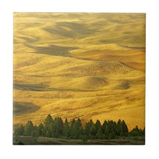 USA, Washington, Whitman County, Palouse, Weizen Fliese