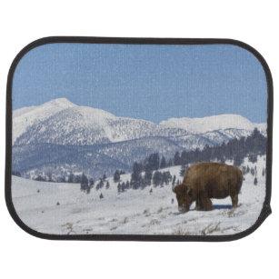 USA, WY, Yellowstone NP, amerikanischer Automatte