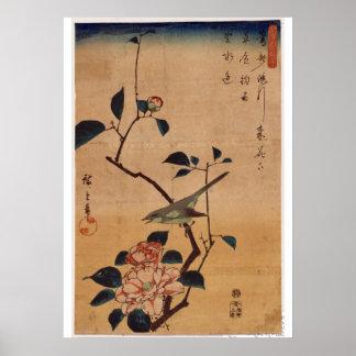 Utagawa Hiroshige, Kamelie und Bush-Trällerer, Poster