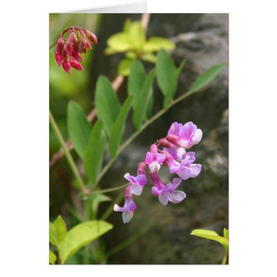 VA-Wildblumen Notecard #3, süße Erbse Grußkarte