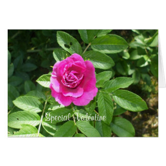 Valentine-Rose für jemand speziell Karte