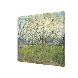 Van- Goghobstgarten mit blühenden Aprikosen-Bäumen Leinwanddruck