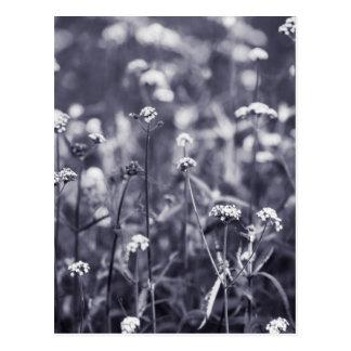 Verbene-Blumen in Schwarzweiss Postkarte