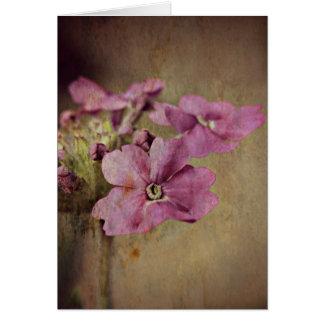 Verbene-empfindliches rosa Blumen Karte