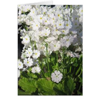 Verbene - weiße Frühlings-Blumen Karte